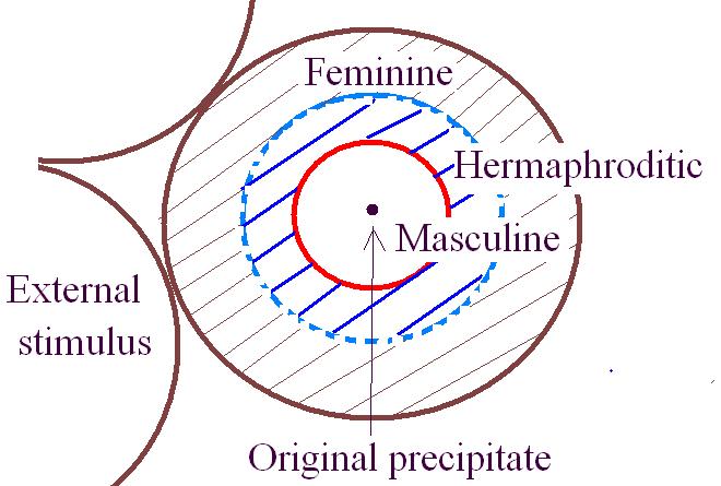 Divine Hermaphrodite